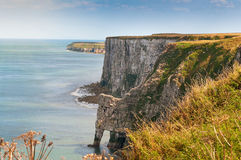 Chalky Cliffs At Bempton In Yorkshire UK Royalty Free Stock Photos