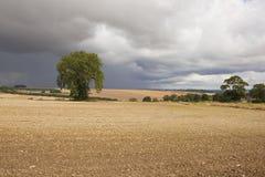 Chalky jordbruks- landskap Arkivbilder