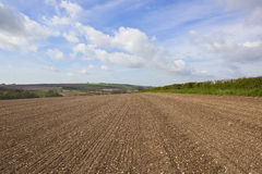 Chalky rural fieldscape. An agricultural landscape with newly cultivated chalky soil on a hillside in the yorkshire wolds england under a blue cloudy sky Royalty Free Stock Image