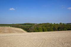 Chalky soil and woodlands of the Yorkshire wolds in springtime. Scenic Springtime woodland near chalky cultivated hillside fields with tyre tracks under a blue stock photos