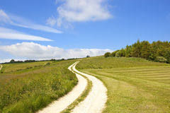 Chalky track and meadows. A chalky white farm track beside woods and grazing meadows in the yorkshire wolds under a blue sky in summer Stock Photos