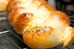 Challah bread. Golden brown home made challah egg bread and buns Stock Photography