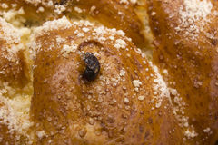 Challah with raisins Stock Images