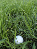 Challenging shot. Golf ball in rough long grass presents makes for a difficult shot Stock Image