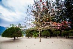 Chalokum beach on Koh Phangan Stock Image