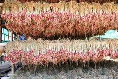 Chalote rojo Fotos de archivo