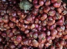 Chalote rojo tailandés Fotos de archivo libres de regalías