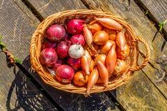 Chalotes y ajo de las cebollas en una cesta de mimbre imágenes de archivo libres de regalías