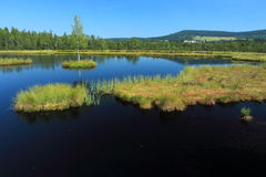 Chalupska-Sumpf in Nationalpark Sumava Stockfotos