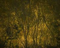 Chama da luz do sol no por do sol Fotos de Stock