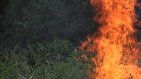 A chama do fogo faz dano à fauna e à flora da floresta após a seca 4K video estoque