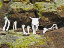 Chamans de Buryat offerts le sacrifice sur le lac Baïkal images libres de droits