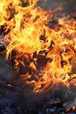 Chamas alaranjadas brilhantes do fogo que queimam-se de madeira na fogueira Fotos de Stock Royalty Free