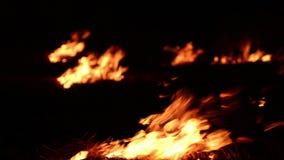Chamas ardentes do fogo na obscuridade video estoque