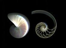 chambered nautilus деталей стоковая фотография rf