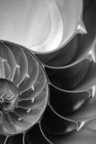 chambered nautilus Стоковое фото RF