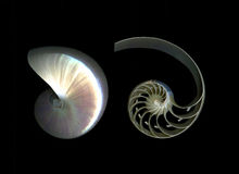 Chambered Nautilus Details. Closeup of nautilus interior and exterior isolated on black background Royalty Free Stock Photography
