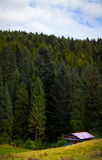 Chambre à la forêt Photo stock