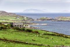 Chambre abandonnée sur le chemin atlantique sauvage du ` s de l'Irlande Photo stock