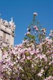 Arbre de Magnoly près de la Chambre avec des chimères Photographie stock