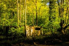 Chambre désolée dans les bois Photographie stock libre de droits