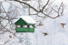 Chambre d'oiseau Photo libre de droits