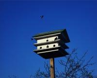 Chambre d'oiseau Images stock