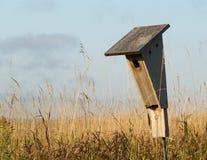 Chambre d'oiseau bleu sur la prairie Images stock