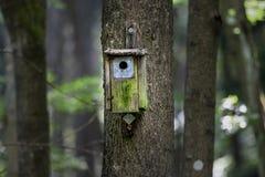 Chambre d'oiseau de bois de construction dans la forêt Images libres de droits