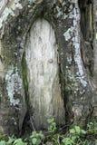 Chambre de fées ? Image stock