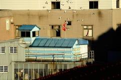 Chambre de pigeon Images libres de droits