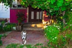 Chambre de porche, pendant l'été images libres de droits