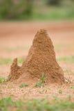 Chambre de termite images libres de droits