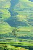 Chambre et arbre Photo stock