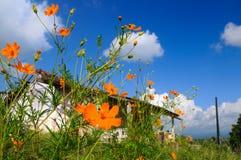Chambre et fleurs Photos stock