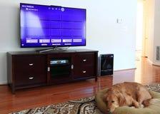 Chambre familiale avec la TV et le chien Photographie stock libre de droits
