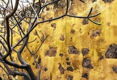 Chambre jaune rurale avec un arbre images stock