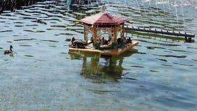 Chambre pour des canards dans la fontaine clips vidéos