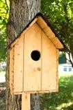 Chambre pour des oiseaux sur un arbre Photographie stock