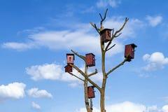 Chambre pour des oiseaux sur un arbre sec Image stock