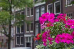 Chambres à Amsterdam avec des fleurs dans le premier plan Images libres de droits