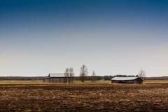 Chambres de grange et arbres de bouleau Photos libres de droits