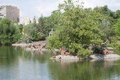 Chambres pour des canards, des cygnes et d'autres oiseaux sur le lac en parc Photographie stock libre de droits