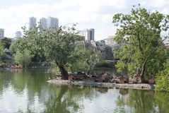 Chambres pour des canards, des cygnes et d'autres oiseaux sur le lac en parc Photo stock