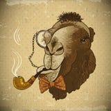 Chameau animal de hippie de carte de vintage avec le tuyau Images libres de droits