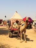 Chameau armé pour abandonner le chariot avec la tente photo stock