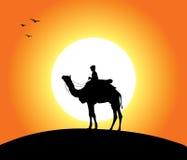 Chameau au coucher du soleil illustration de vecteur