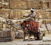 Chameau dans la pyramide Photographie stock