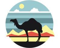 Chameau dans le désert Photos stock