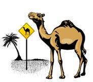 Chameau dans le désert avec le signe Image libre de droits